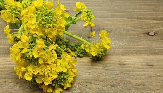 花が固まって咲き、セイヨウカラシナに比べ大きい花びらです。葉っぱも丸っぽい形をしていたり、大きく異なるのは葉っぱの付け根です。