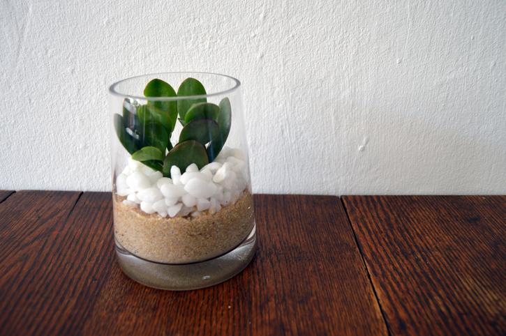 ガラスの器に石で表面をマルチングしたら清潔感が出ますね。