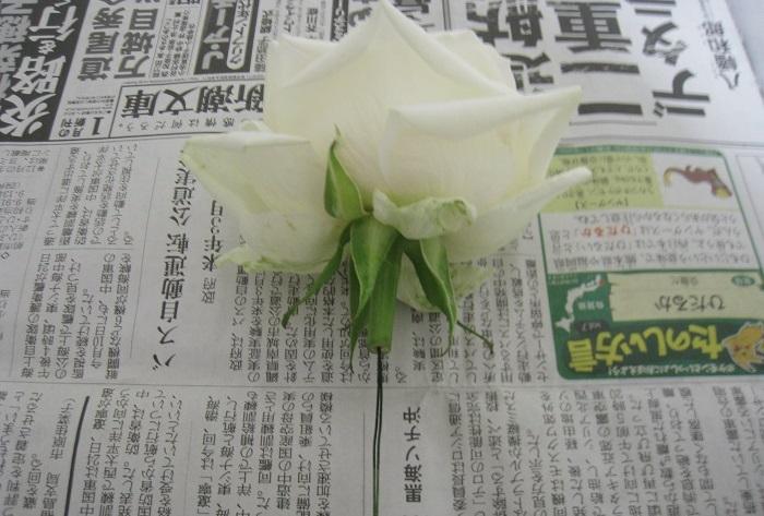 花の茎を、少しだけ残して切ります。茎から花の中心に向かってワイヤーを通しておくと加工に便利です。  密封容器にシリカゲルを敷きます。敷く厚さなどは、シリカゲルの商品説明をよく読んでください。