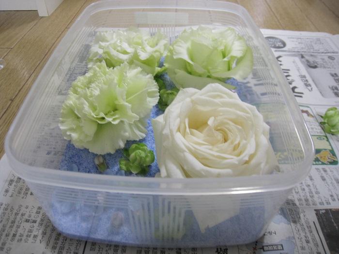 シリカゲルの上に花を並べます。花が重ねないように注意しましょう。