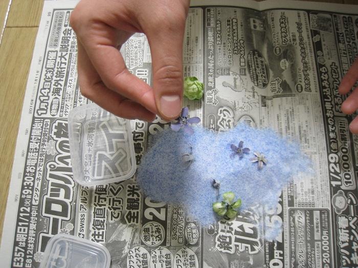 ドライになった花は壊れやすいため、扱いには十分注意してください。
