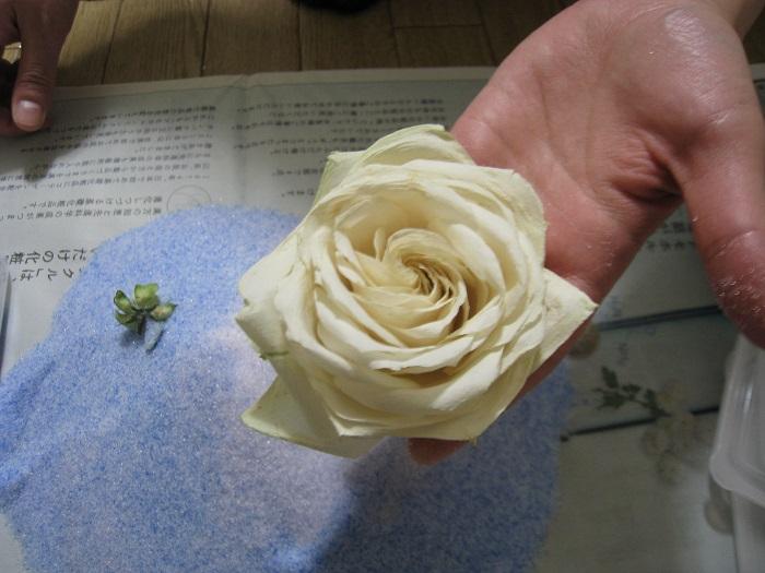 花についてシリカゲルを優しく払って完成です。