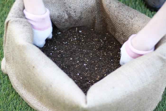 今までご説明した通り、パーライトは様々なトラブル改善に用いることのできる土壌改良材です。  主に白い顆粒状で、とても軽くため水に浮きやすい性質です。  そのままパーライトに植物を植えると、水を与えるたびに植物が浮かび上がってしまうため、パーライト単独で使用する事は難しいようです。  使用する際は土に1~2割ほど混ぜて使用しますが、長年使用していると度重なる水やりで、パーライトのみが土の表面に浮き上がってくる可能性があります。植え替えなどの機会にしっかり土とパーライトを混ぜ合わせてご使用ください。
