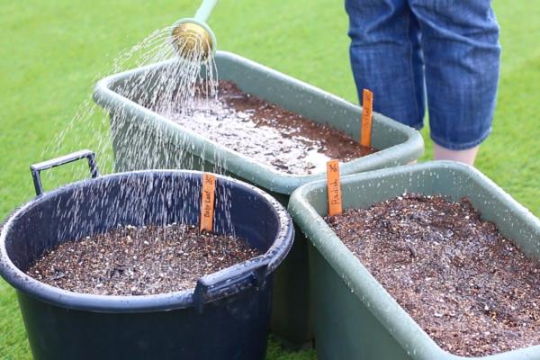 天気や温度にもよりますが、ラディッシュは発芽までに数日から1週間ほどかかります。発芽までに土が乾燥しないように注意しましょう。