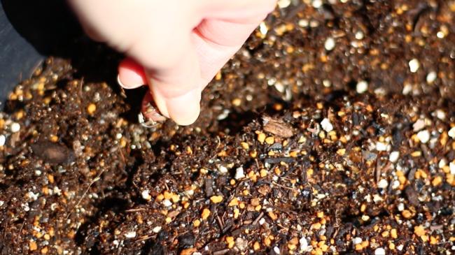前回の種まきの場所から5~10cmほど内側にまきました。細くて小さい種ですが、出来るだけ種が重ならないようにまいていきましょう。 ベビーリーフ・ラディッシュどちらも30日ほどで収穫できるので、密植状態にならないようにスペースを考えながら「追いまき」をして収穫する楽しみを増やしましょう。