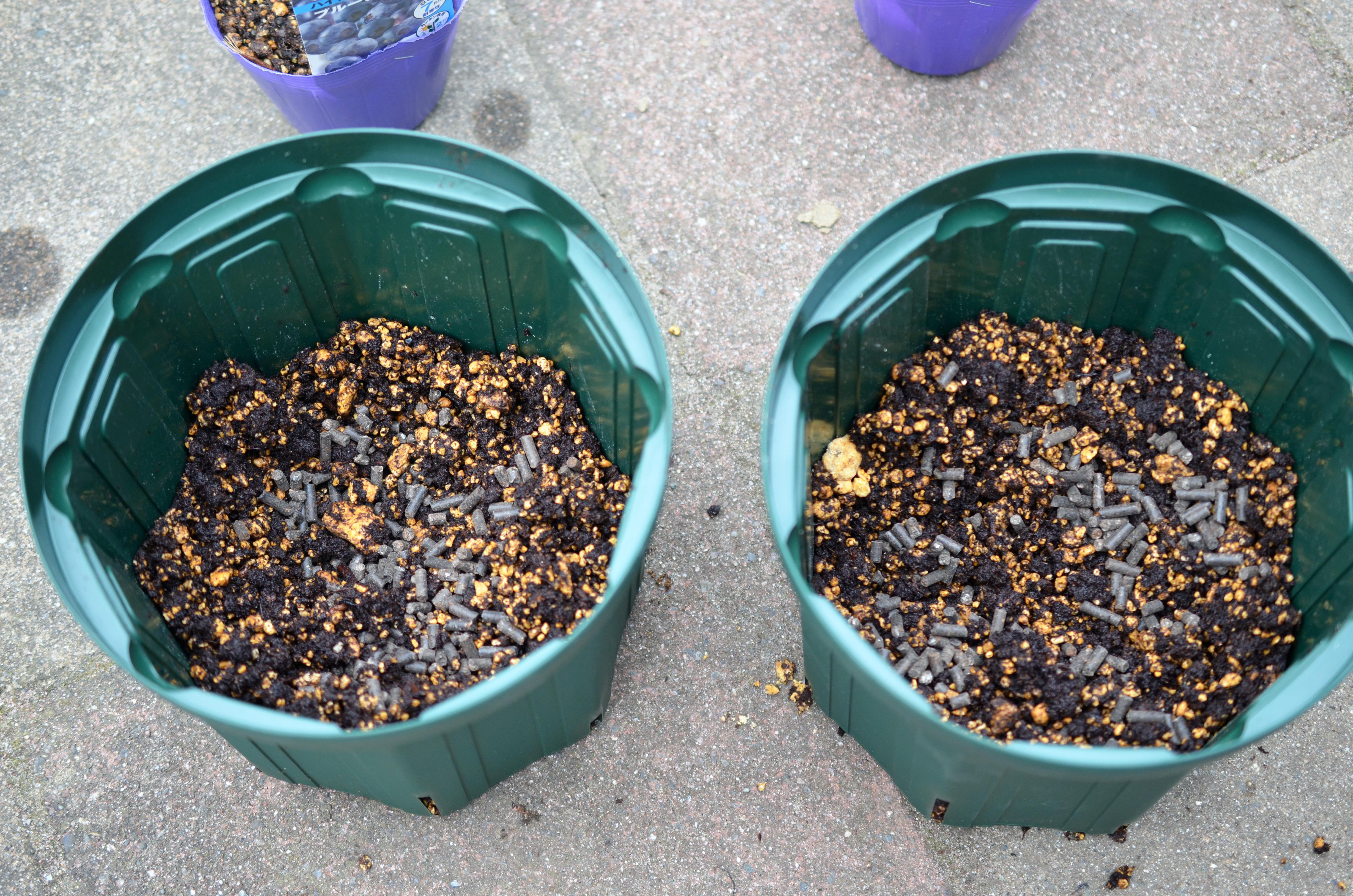 ⑥ブルーベリー用の肥料も元肥として入れておきます。鉢に土を投入し、苗を取り出して植えつけます。簡単ですね♪