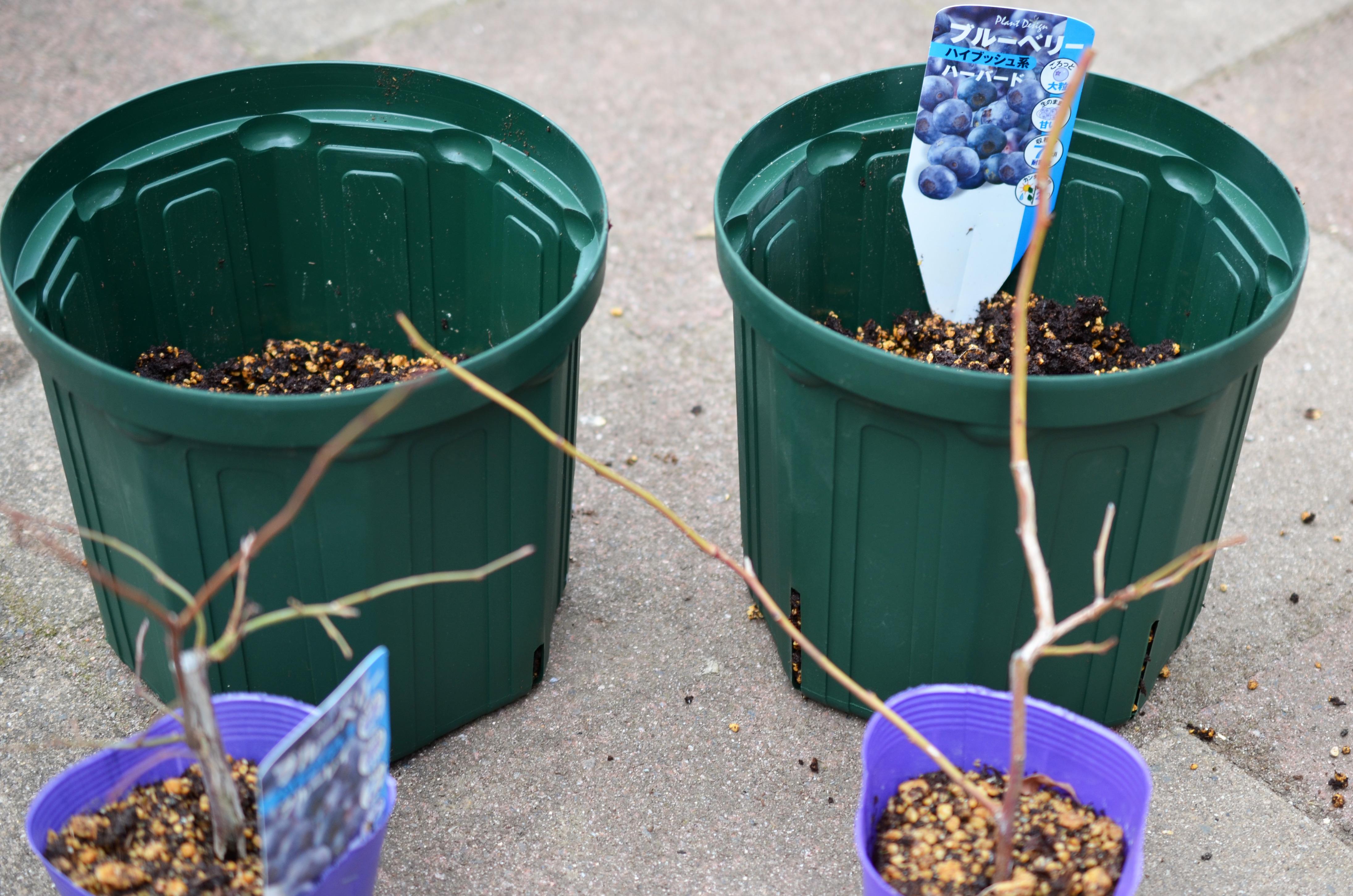 ここで一点だけ注意!  複数の苗を同時に植え付ける時にありがちなことなのですが、二本の品種タグを同時に取ってしまわないように注意しましょう!  どちらのタグだったかわからなくなると後々後悔することになります・・・(そんな私は経験者です。笑)  苗とタグは必ずセットで。一つの苗を植えつけた後に次の苗に移ることをオススメします。