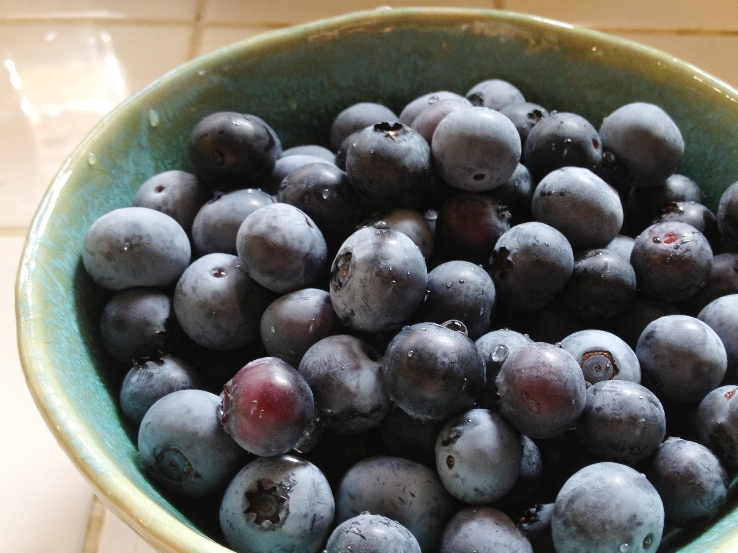 ブルーベリーの実の収穫時期は初夏ごろ。ベランダやお庭で育てることのできる人気の果樹です。