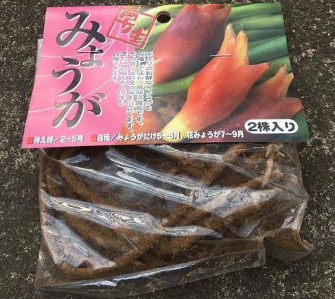 こんなふうにパッケージされていたので、思わず今年の3月に買ってしまったみょうがの地下茎。