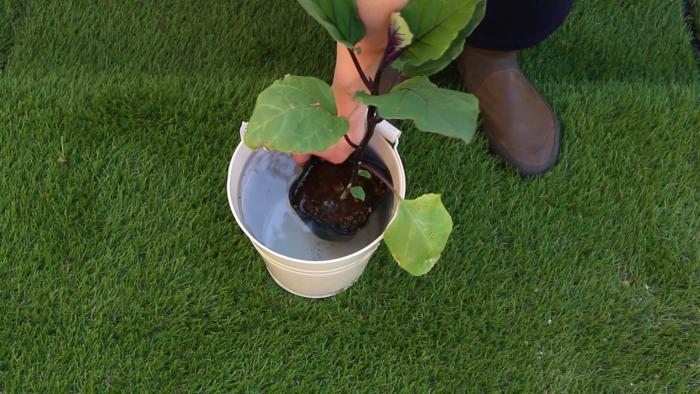 1 苗に充分水分を与える。  バケツの中に苗ごと沈めて、しっかり水分を与えてください。ジョウロで水を与えても構いません。