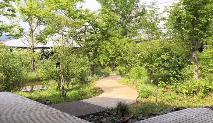 展示館中庭には牧野先生が命名された植物や、植物図に描かれた植物など、牧野先生にゆかりのある植物がたくさんあります。