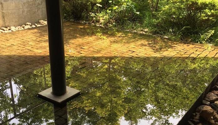 水盤にうつる木々もまた表情が違って見飽きません。