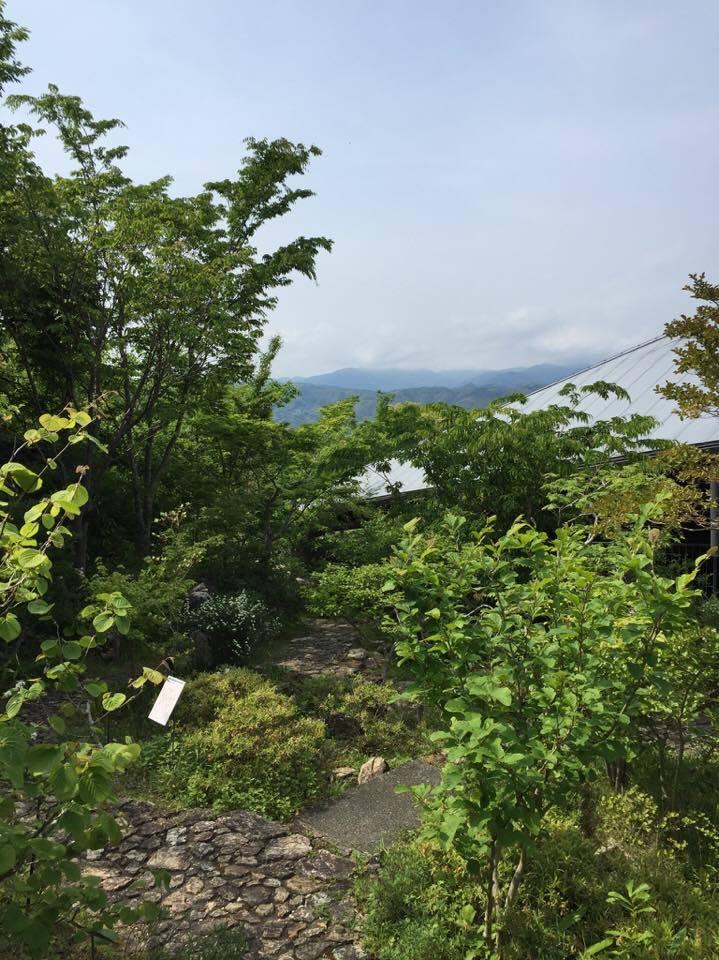 牧野富太郎先生の名前を冠した植物園は、高知県高知市の五台山のなかにあります。山の一部が植物園になっており、広大な敷地に植物園や牧野富太郎記念館、温室、ミュージアムショップ、レストランなどがあります。記念館の設計は内藤廣氏によるもので、植物と調和するような建築になっています。2016年の5月に訪れたときの写真とともにご紹介します。牧野植物園に行きたくて高知旅行を決めたので、一日たっぷり見ようと思っていきました。