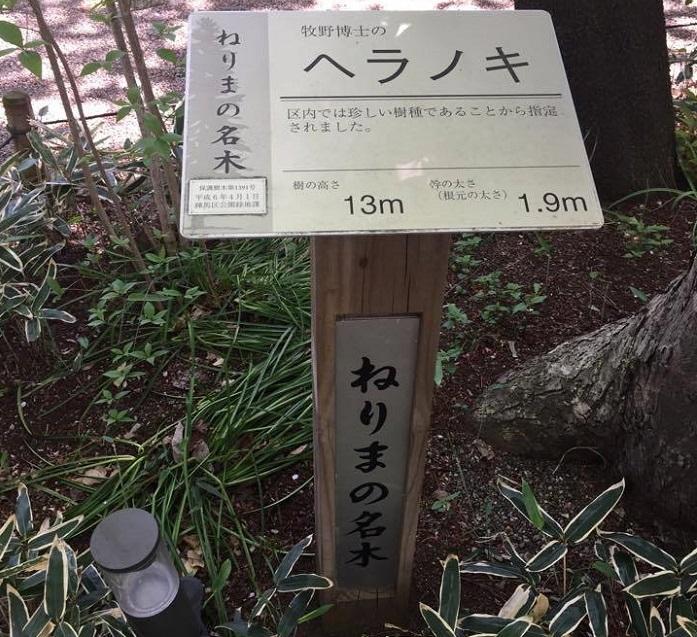 ねりまの名木ヘラノキ。本州近畿以西、四国、九州に分布する木で練馬区では珍しいために名木指定されています。