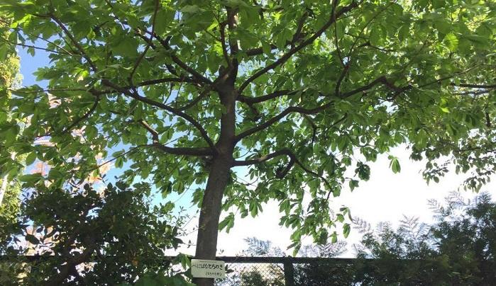 葉が大きい木は風が吹くとゆらりと枝がしなるのでとてもきれいです。