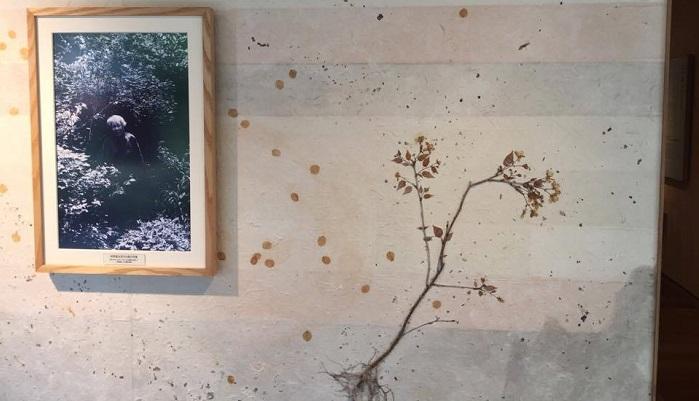 牧野富太郎先生ゆかりの植物が和紙に漉き込まれています。真ん中には牧野先生の写真と右にワカキノサクラが