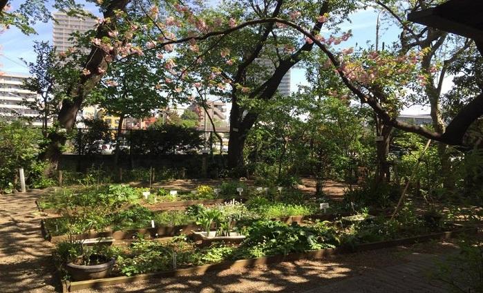 牧野富太郎先生が命名した植物たちはこんな風に仕切られて育てられています。