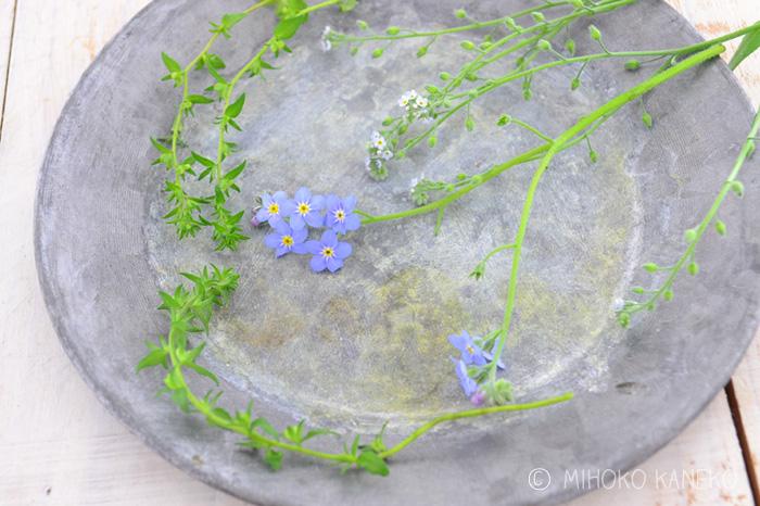 育てた草花を摘み取る時間帯は、午前中(できれば10時まで)か、夕方に摘みます。植物にとって、昼間は水分を発散する時間帯です。そのため、昼間に摘み取った草花は、水が下がりやすくなります。いつに摘み取るかによって、日持ちが全然違います。