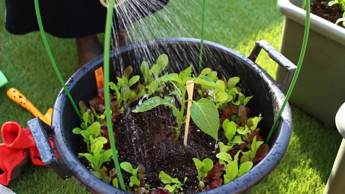 5 最後は水をしっかり与えます。  植えたばかりのパプリカの苗は、土に活着するまでに少し時間がかかります。その際、根が乾燥してしまわないためにも、植え付けから1週間位は、しっかりと水を与えます。  水の代わりに、病害虫予防のためのニームを希釈したものをかけてもいいでしょう。