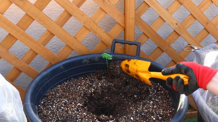 2. プランターに苗と同じくらいの穴を開け、ピーマンの苗を軽く手で押さえ根鉢を崩さないように植え付けます。  野菜の苗は根を傷つけないように優しく植え付けるのがポイントです。