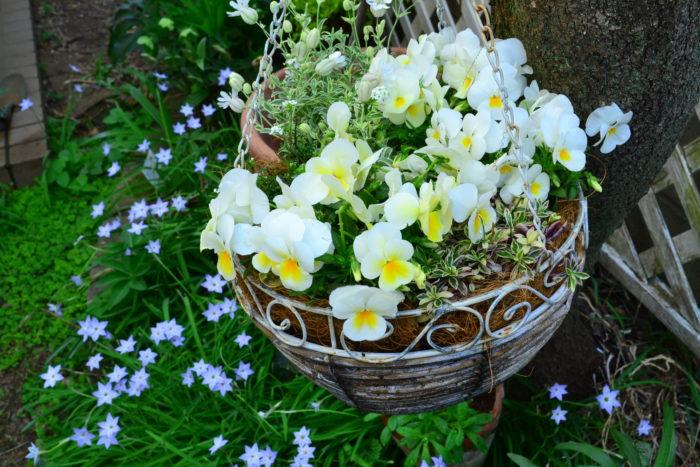 複数の種類の植物をひとつに寄せ植えするときは、開花期間が同じ植物を選ぶことがとても重要です。