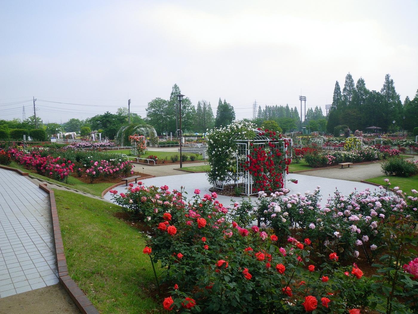 園路は広めで、ゆっくりとバラを楽しめそう。