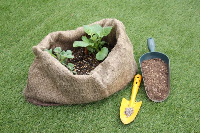 〜材料〜  ・培養土  ・肥料(今回は使用しやすいペレット状に加工された有機肥料を使用しています)