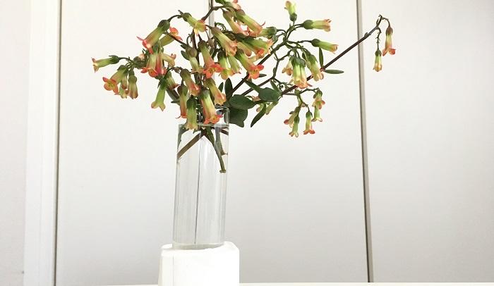 お花が可愛いカランコエ