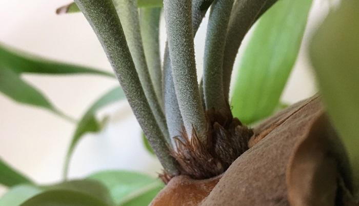 毛羽立つ葉の表面