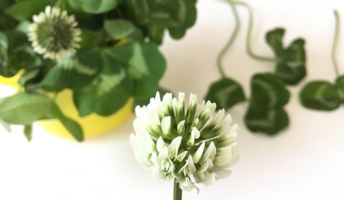 シロツメクサで花かんむりやブレスレット、指輪を作ってみました。みなさんも昔作って遊んだ思い出があるんじゃないでしょうか?  ささっと子供にシロツメクサのアクセサリーを作ってあげたら、おしゃれ大好きな子供は大喜びです。ぜひ休日にお子さんと一緒に野の花遊びを楽しんでみてくださいね。