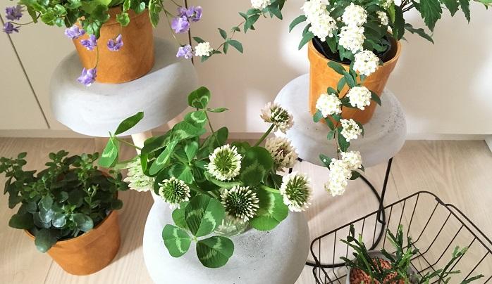 季節の鉢花コーナーをつくってみてもいいですね。