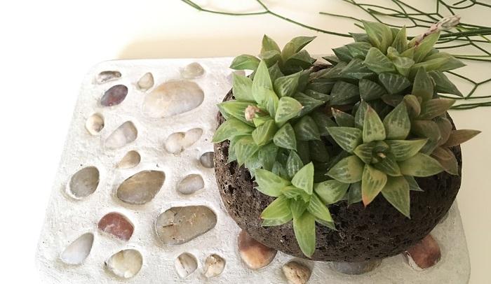 セメントプレートは受け皿替わりに使えます。軽石に植えた植物やコケ玉など棚に直接置きにくかったものにも使えます。