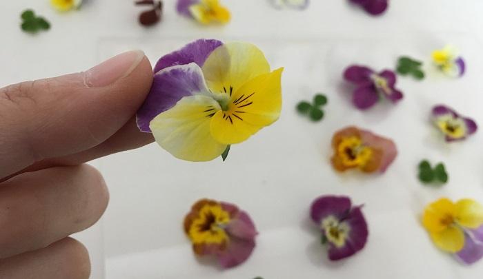 切り花を飾る感覚でその日の気分に合わせてお好みの花びらで遊んでみませんか?  浅いお皿に水をはって花びらを浮かべるのも素敵です◎