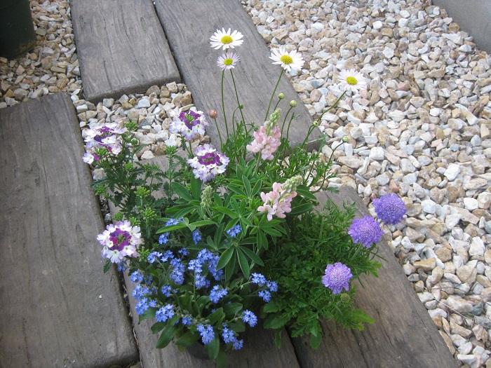 今回は、野に咲く花を集めたようなナチュラルな雰囲気をイメージしてセレクトしました。  左から時計回りに、バーベナ(白紫)、ブラキカム(白黄)、スカビオサ(青紫)、ルピナス(ピンク)、ワスレナグサ(青)