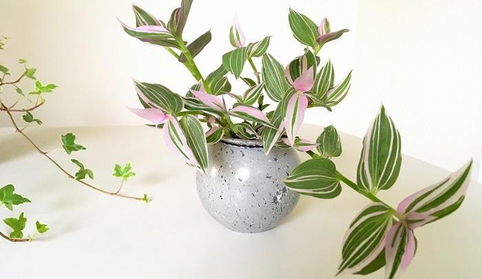 「ハイドロ」は水という意味で、ハイドロカルチャーは水耕栽培のことを指します。水を好む植物を土を使わず、水で育てることです。ハイドロカルチャーでは、植物を安定させるために「ハイドロボール」と呼ばれる専用の用土がよく利用されます。
