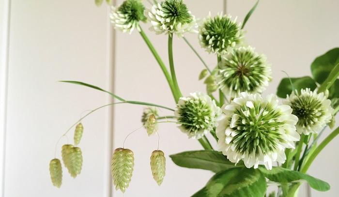 シロツメクサは花瓶にさしておくと切り花としても楽しめます。野の花の素朴な雰囲気をお部屋で楽しめるのは嬉しいですね。