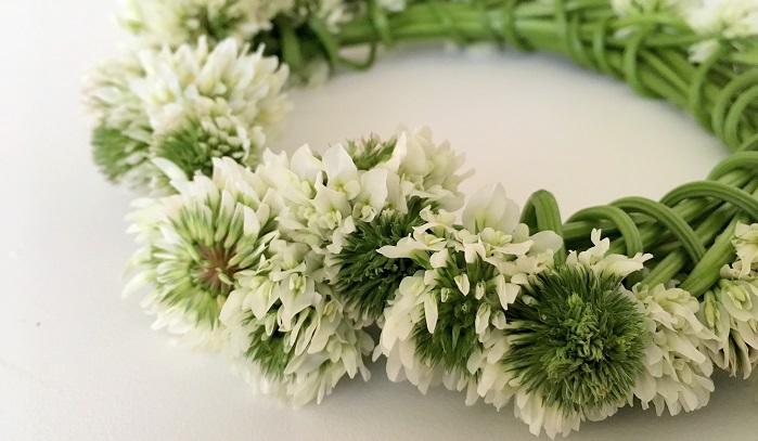 野の花で遊ぼうシロツメクサの花冠の作り方 Lovegreenラブグリーン