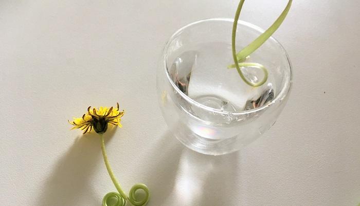 タンポポの茎は半分に割いて水に濡らすとくるんとまわって遊べますよ♪