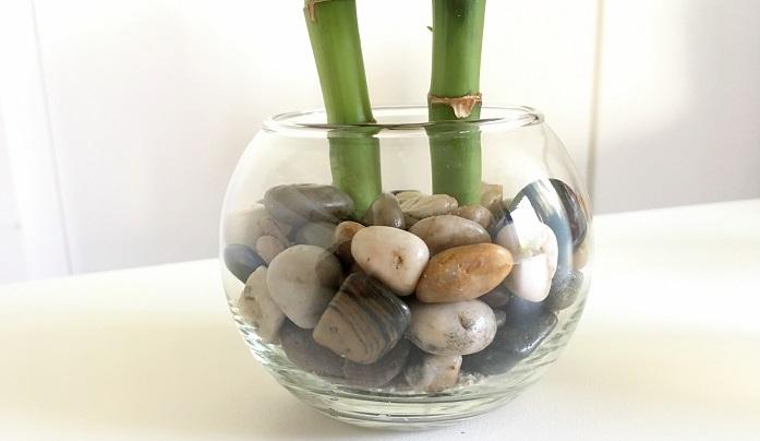 今回は普通の天然石を使用したので水栽培になります。下の写真は水やり前。