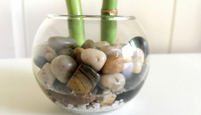 容器の1/3~半分くらいの水の量を入れましょう。  石はミリオンバンブーを固定する役目だけで、ハイドロボールと違って通気性、保水性などはない状態です。なのでお水はいつも清潔な状態を保ち、もし汚れてきたら一度取り出して石やガラスも洗いましょう。