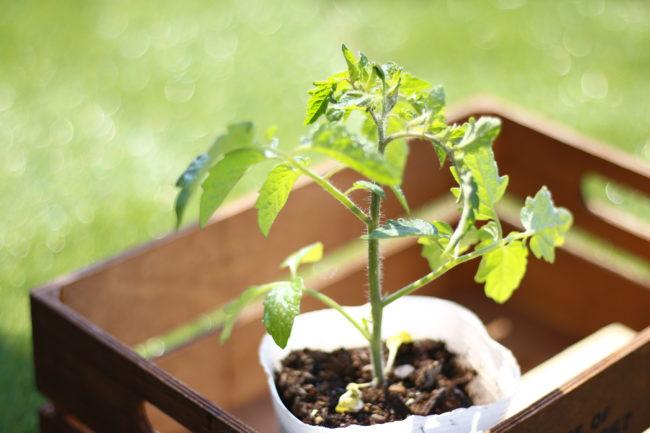 〜小満〜  あらゆる生命が天地に満ち始めます。日ごと上昇する気温で葉の緑がより濃くなるこの季節。植え付けた苗のお手入れを始めましょう。