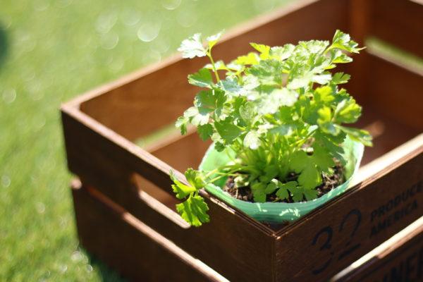 害虫被害を押さえる効果が期待できます。ネギ類やパセリ・セロリ、ハーブ類のような匂いの強い野菜で害虫を遠ざけます。