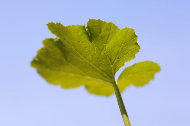 青空に綺麗な緑の葉♪  このズッキーニの苗の勢いをそのまま上手に育ててあげたいですね。