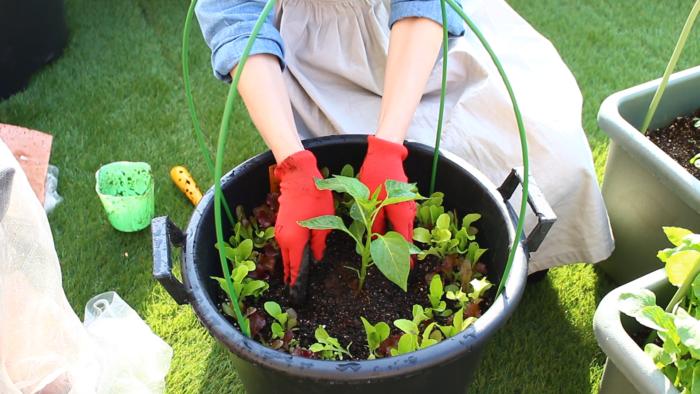 3. 苗の周りを少し凹まして、苗にしっかり水が浸透するように植え付けてあげましょう。  こうすることでこの部分に水が集まり、植え付けた苗に水が浸透しやすくなります。