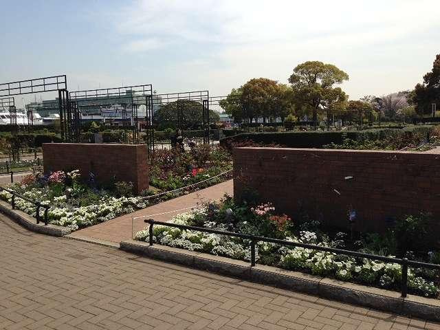 山下公園は横浜でもっとも有名な公園のひとつです。桜の名所として、テレビなどで紹介されることも多いですよね。そんな山下公園、じつはバラの名所でもあります。  園内のバラ園には、既存のバラとリニューアルで新規に植えられたバラ合わせて約190種・2,650株が植えられています。