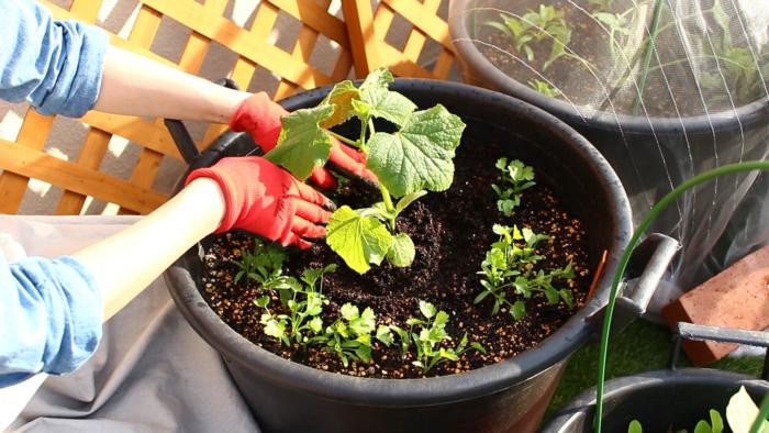 こうすることでこの部分に水が集まり、植え付けた苗に水が浸透しやすくなります。