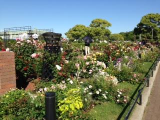 バラ以外にも宿根草を植栽されていて、一年を通じて楽しめるバラ園になっています。