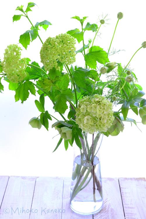 ビバーナム・スノーボールとクリスマスローズ、ニゲラなどをガラスの花瓶にざっくりと生けてみました。花屋さんでは冬場でも見かけることはありますが、ビバーナム・スノーボールの本来の開花時期が初夏なので、一年で一番出回り量が多く価格的にも買いやすい価格で出回っているのが5月ごろです。