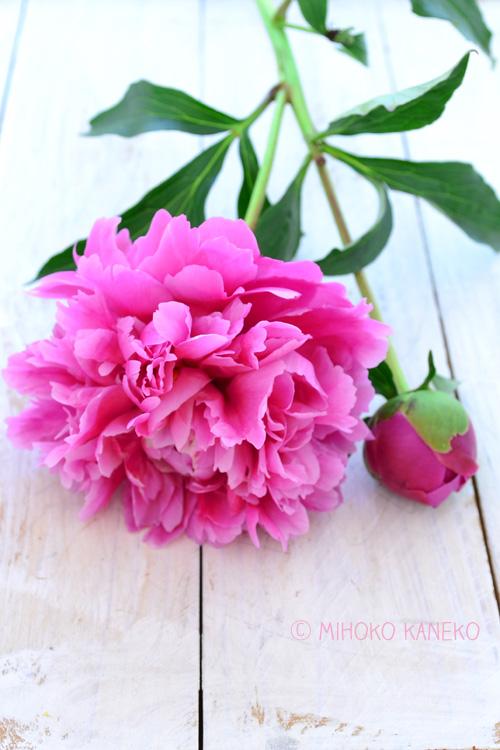 ただいま花屋さんではたくさんの品種のシャクヤクを見ることができます。この季節だけ出回る花材なので、お気に入りの品種を見つけに花屋さんに立ち寄ってみてはいかがでしょうか。