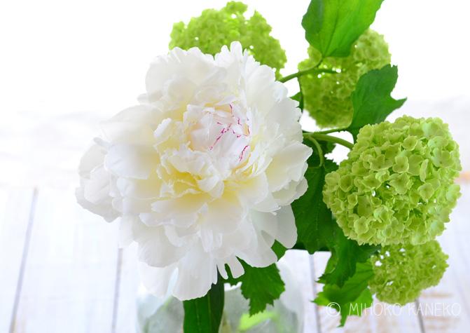 ただいま花屋さんではたくさんの品種のシャクヤクを見ることができます。